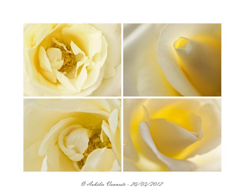 La couleur blanche - The color white
