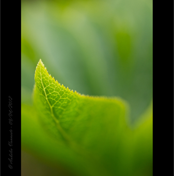 An abstract of a leaf I