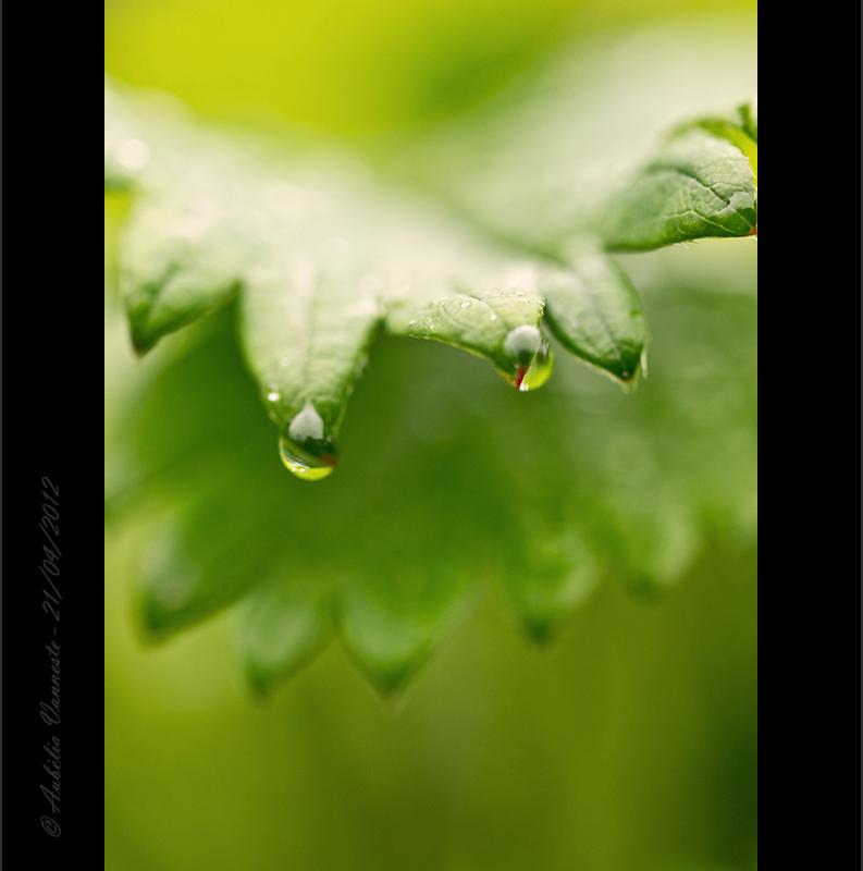 Theme : Raindrops I