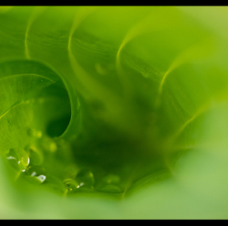 Abstract   Green passion II