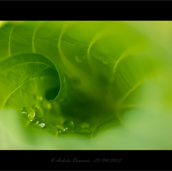 Abstract - Green passion II