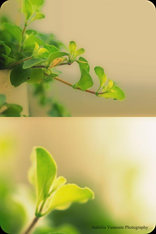 Nostalgique - Différentes teintes de vert