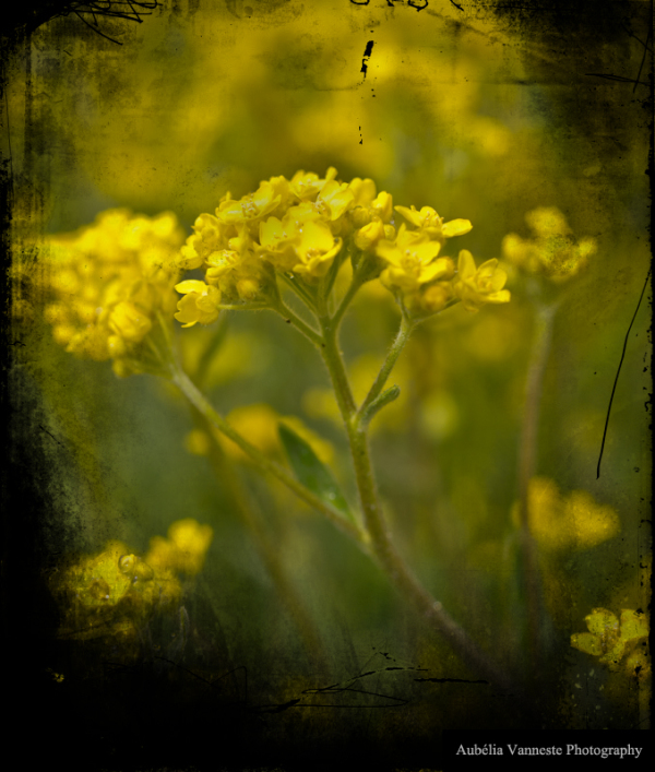 In a yellow world