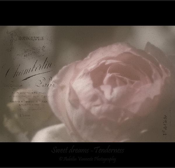 Sweet dreams - Tenderness