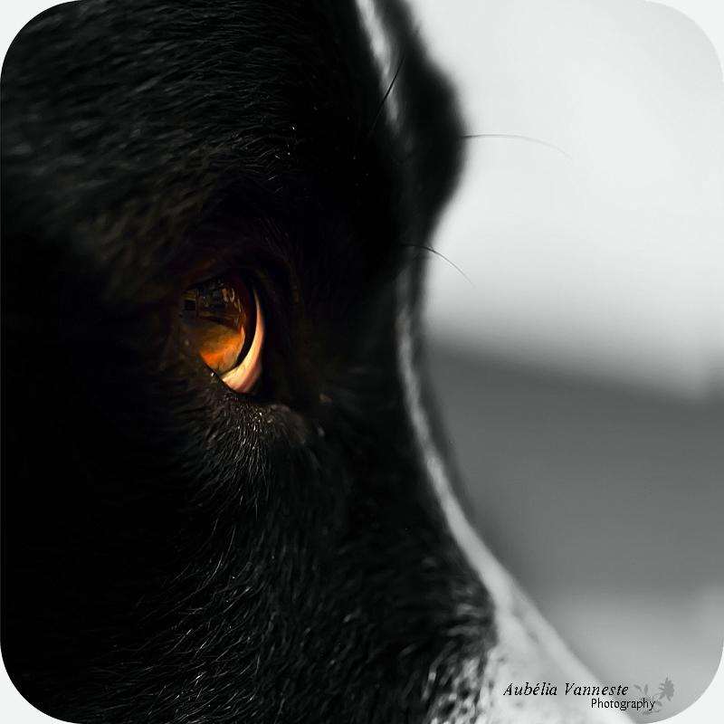 Mon chien Maron _ My dog Maron