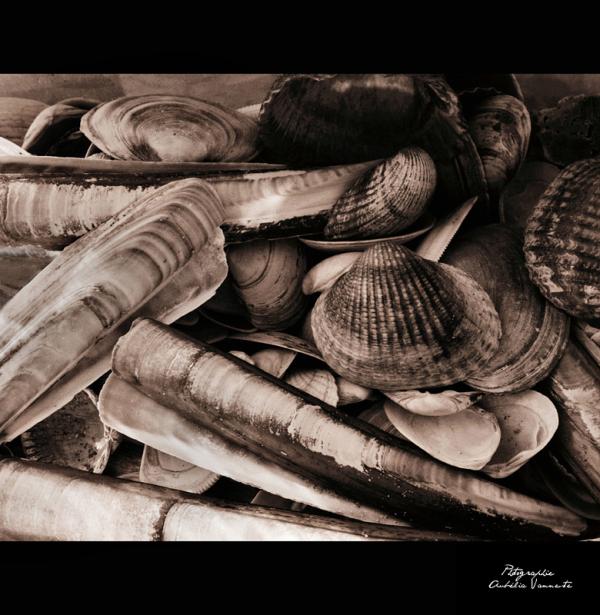 Goût de la mer