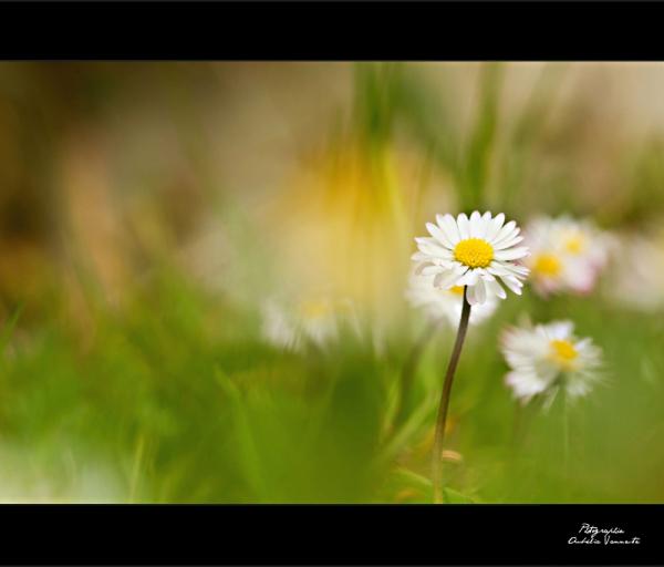 Le printemps
