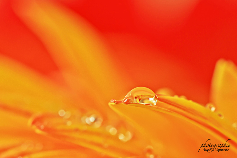 Dans un environnement d'orange et de jaune
