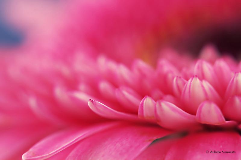Pink world