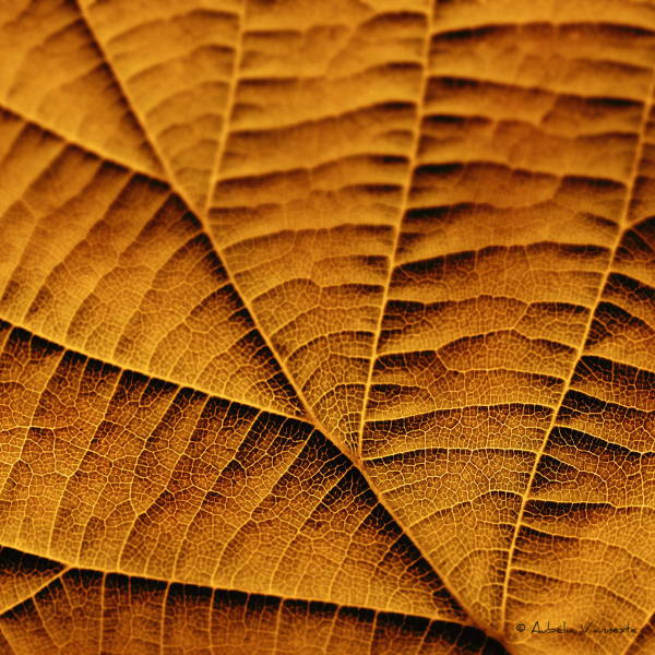 Leaf in golden tones