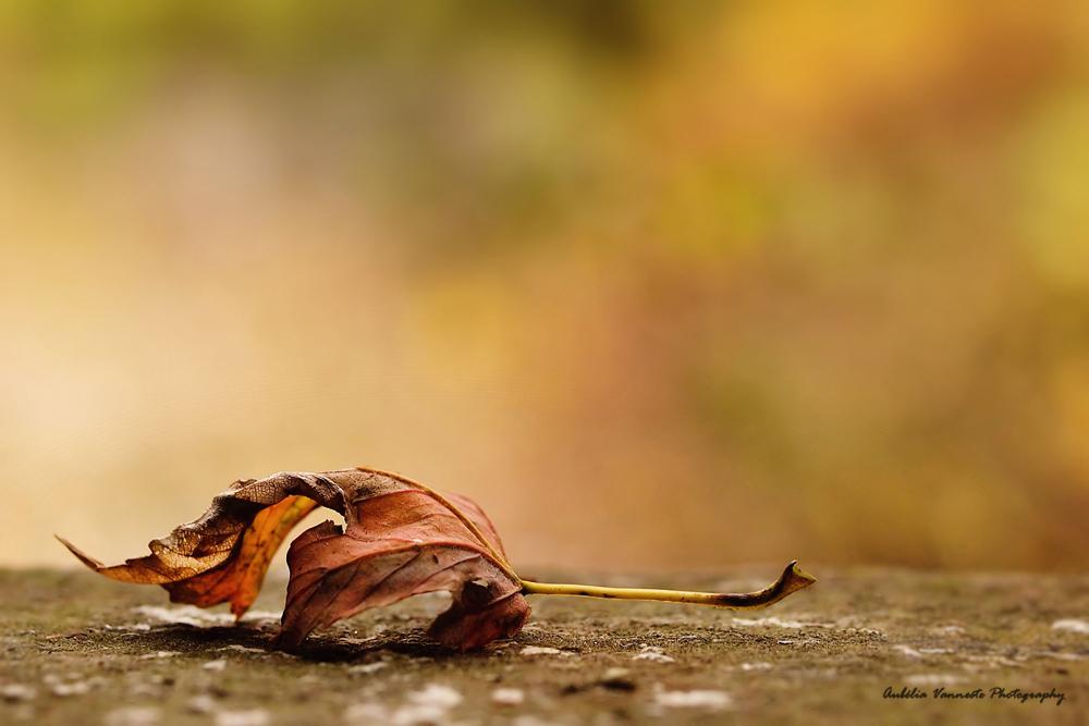 Autumn period