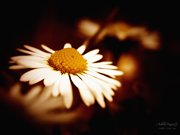Little flower in the dark