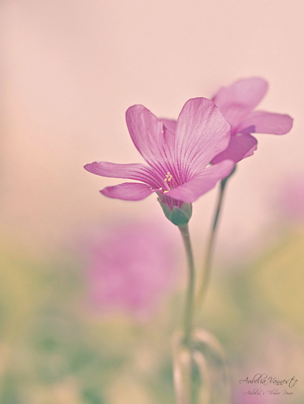 Two pink flowers in a peaceful environment