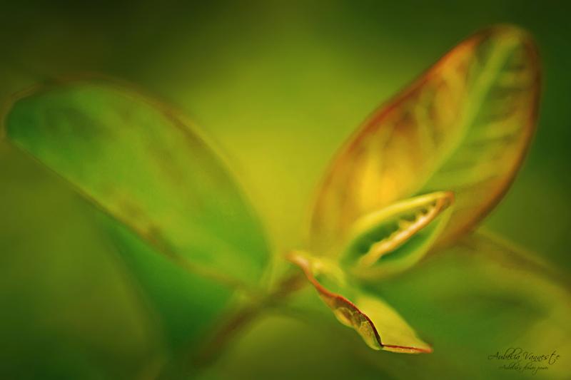 Green, I'm alive