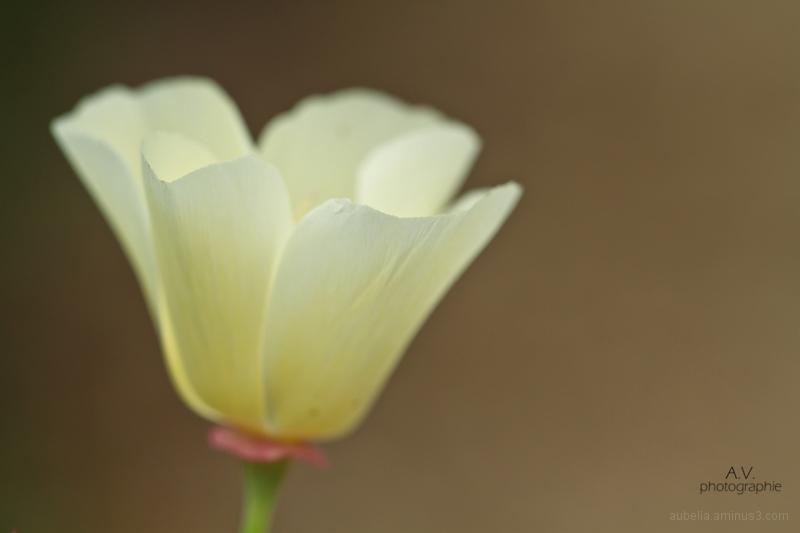Wonderful, white flower