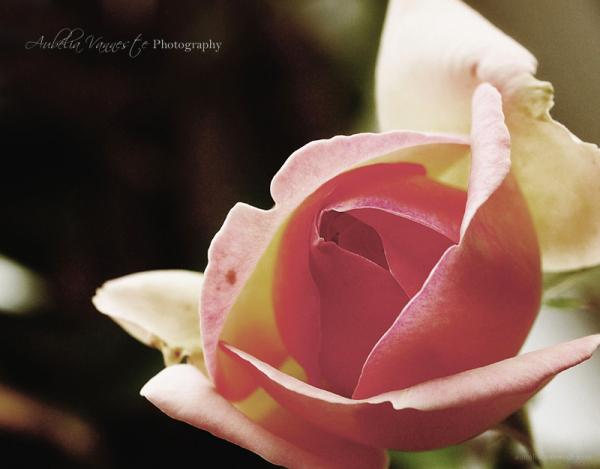 Une fleur pour vous