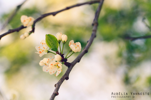 The splendor of spring