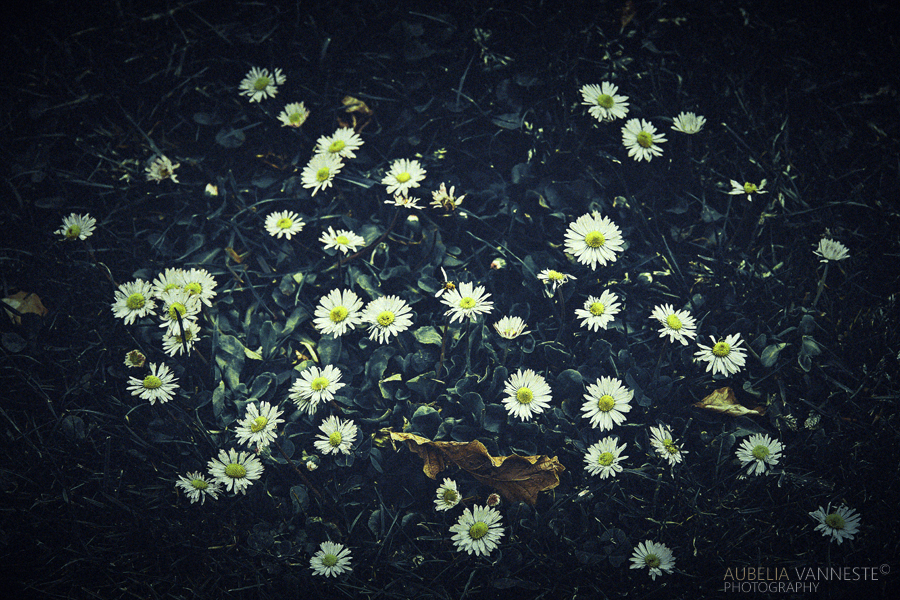 Flowers in the grass