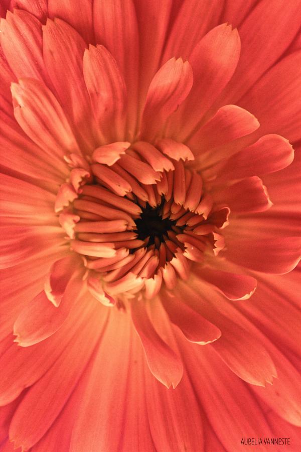 Un coeur d'une fleur