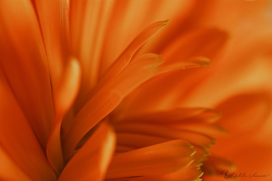 An orange  explosion