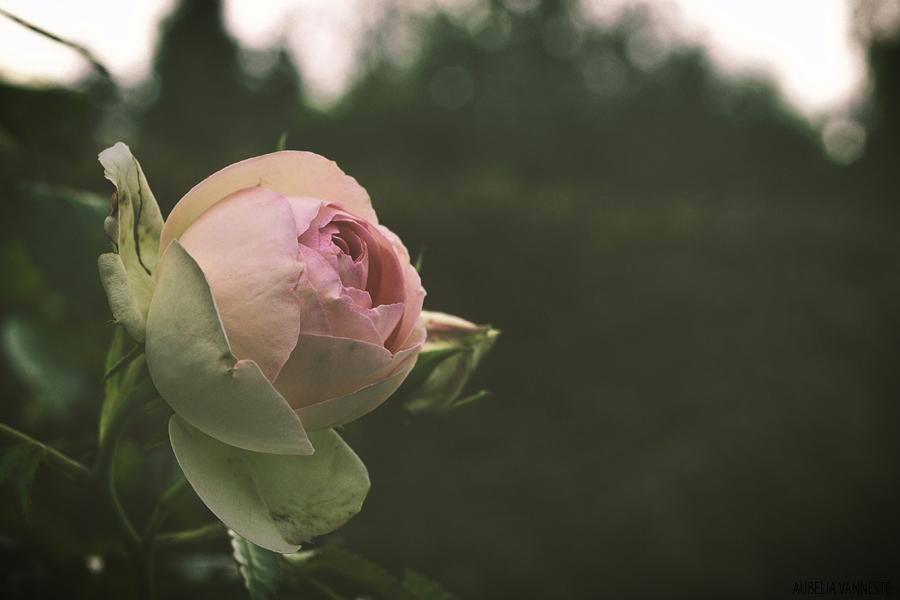 La beauté d'une simple fleur