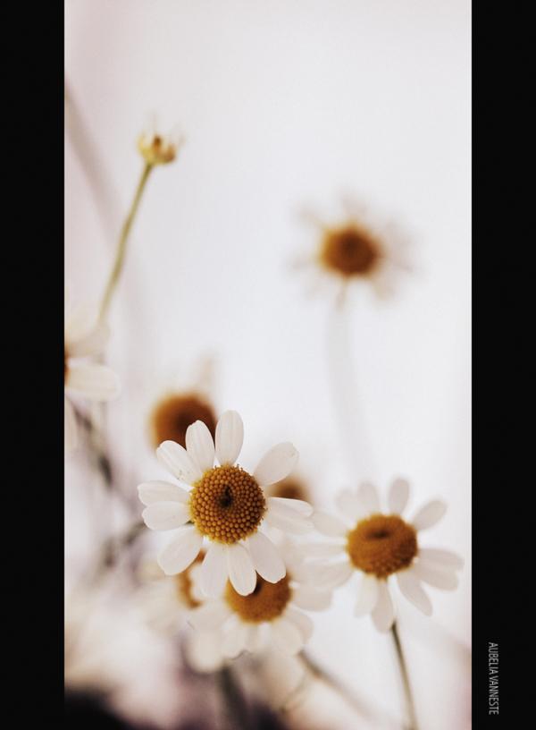 Ces petites fleurs
