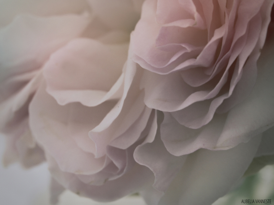 Petal after petal