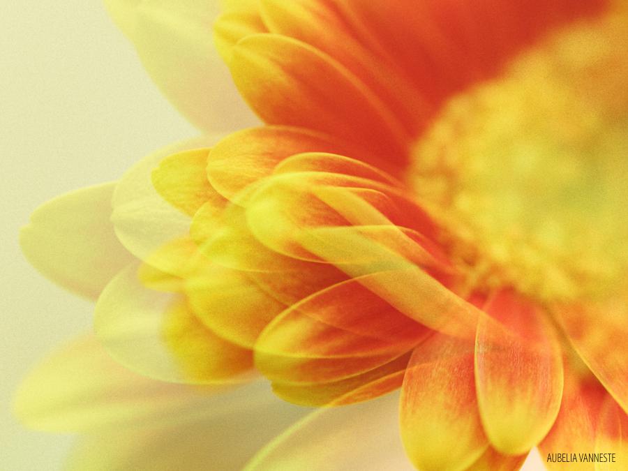 A playful flower