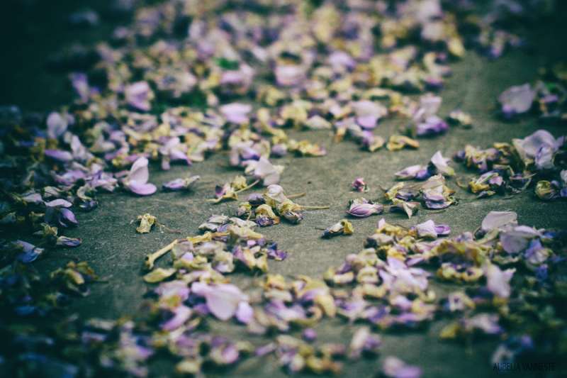 The falling of the petals
