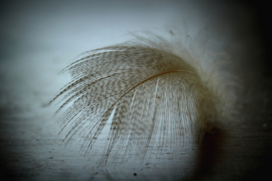 The softness of a feather