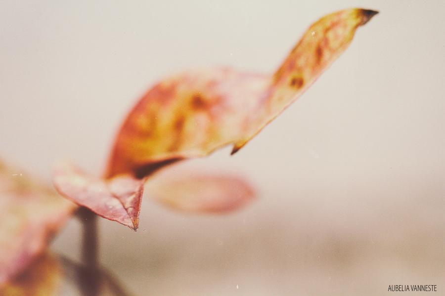The beautiful shape of a leaf