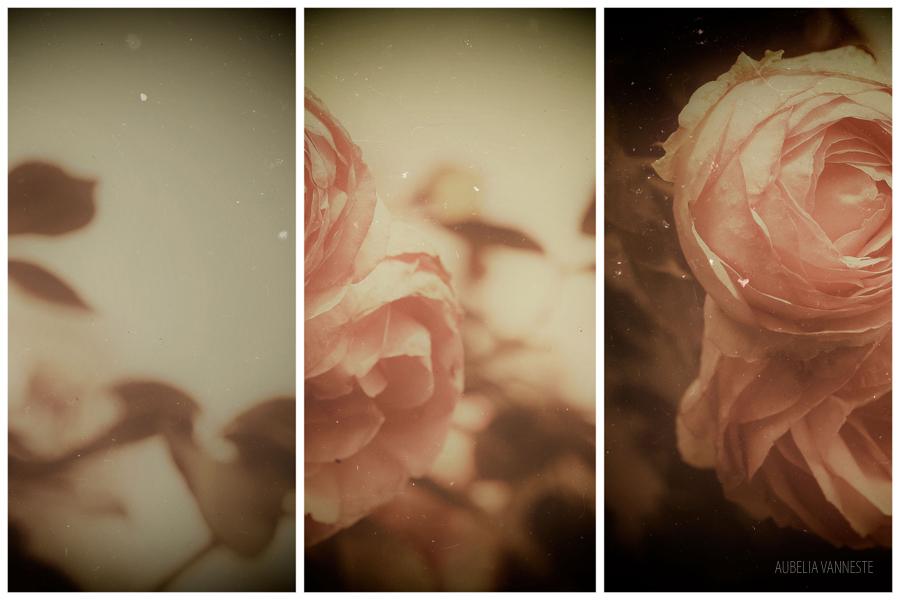 Rose mood