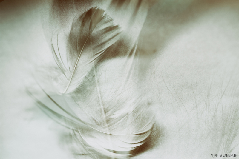 The dancing feathers