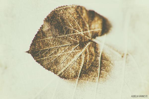 Forgotten leaf