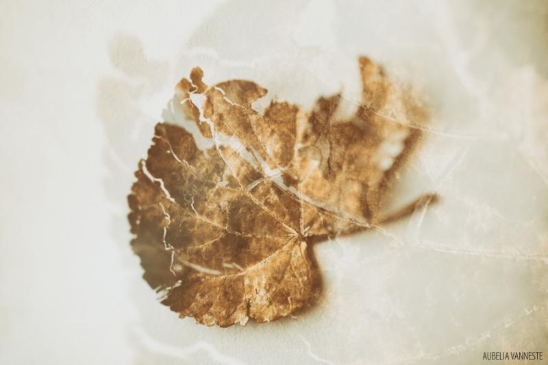 Broken leaf