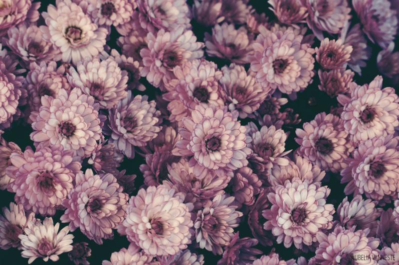 My week of flowers