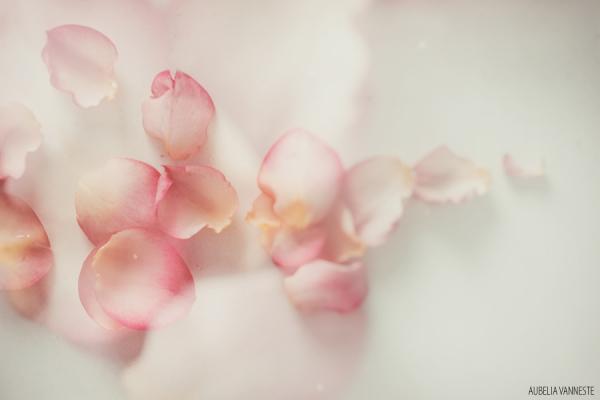 Celebrations of the season's floral abundance