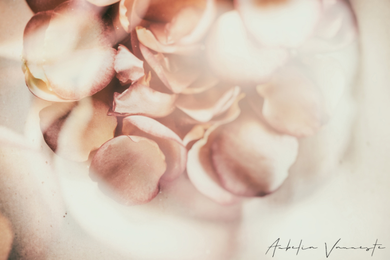 нoυѕe oғ roses
