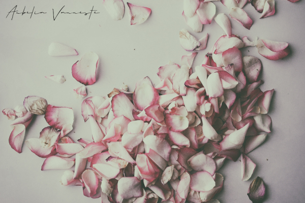 Dreaming of Faded Roses