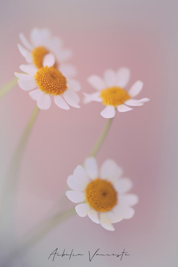 Flowers say...