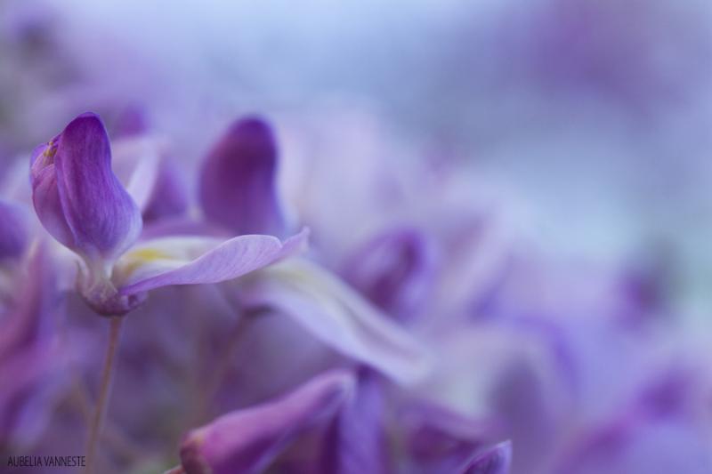 Favorite spring scent