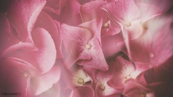 Velvety flowers