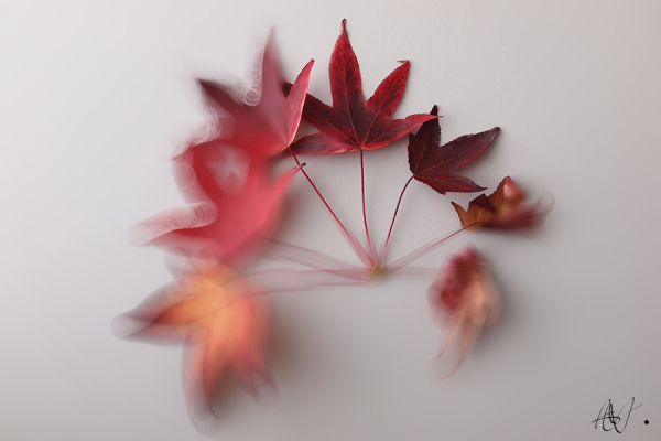 Red, beautiful leaves