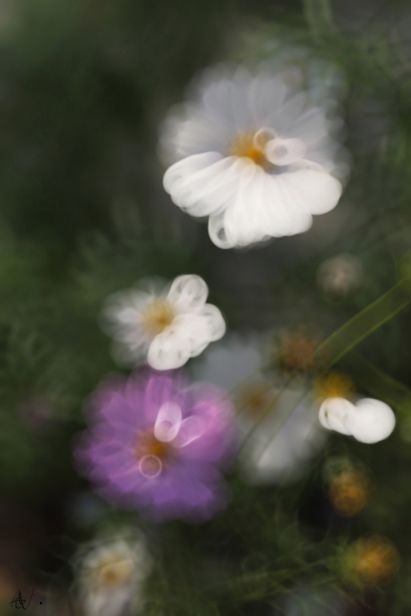 Quand la fleur est prête, elle s' ouvre à toi