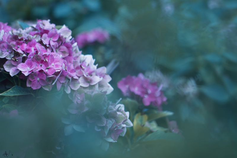 The purity of the flowers...