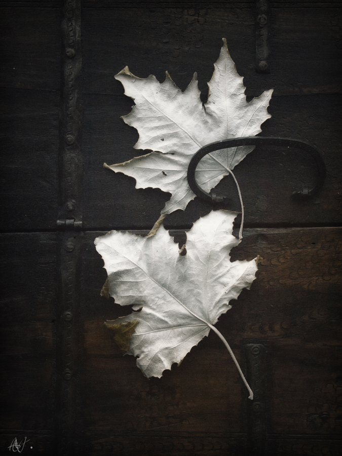 Leaves and wood, the perfect combination