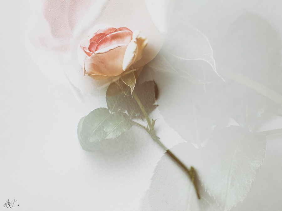 Poetry with roses