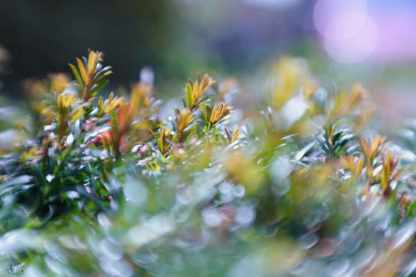 Garden poetry