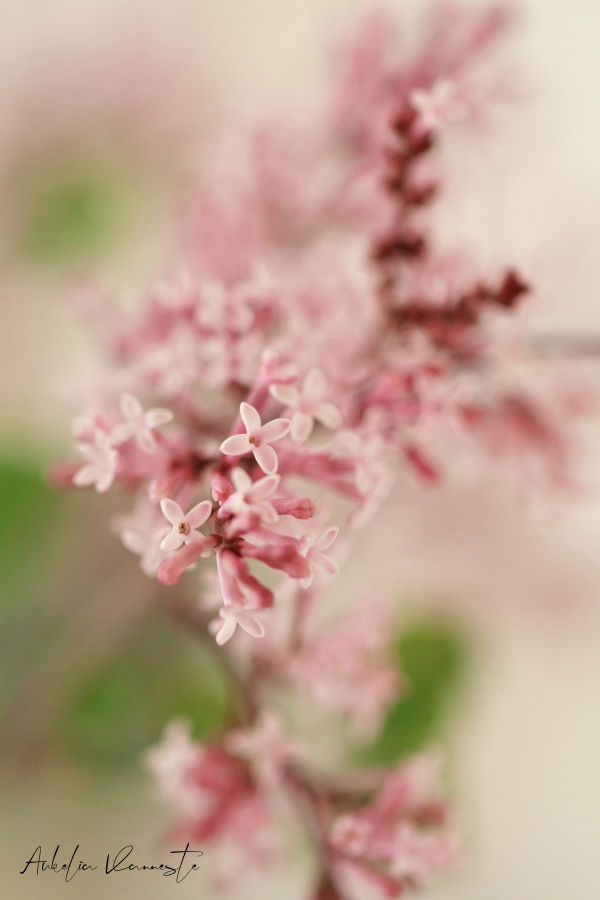 A perfume flower
