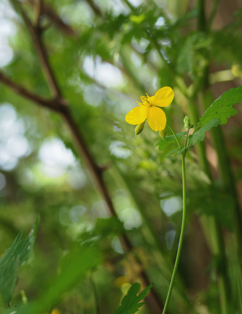 A yellow flower along the roadside